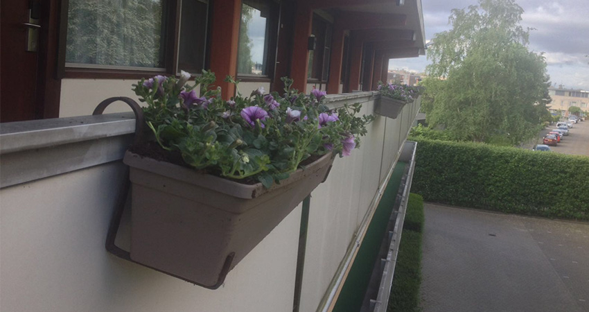 Plantenbakken4-850x450pix